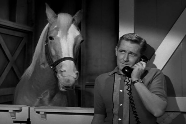 Mister Ed - Watch Full Episodes and Clips - TV.com